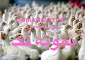 قیمت تمام شده تولید مرغ برای مرغداران 09124496359 09124439674 09122345865 09128381978