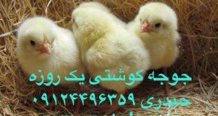افزایش قیمت مرغ به دنبال نهاده 09124496359-02188433245