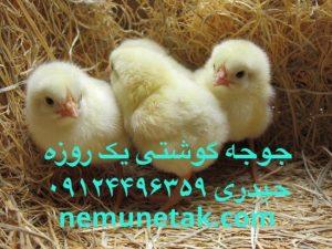 کاهش تولید تخم مرغ در تهران 09124496359 - 09124439674