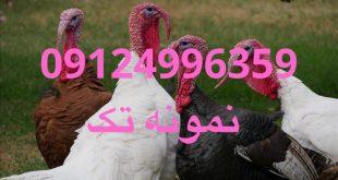 09124496359 09124439674